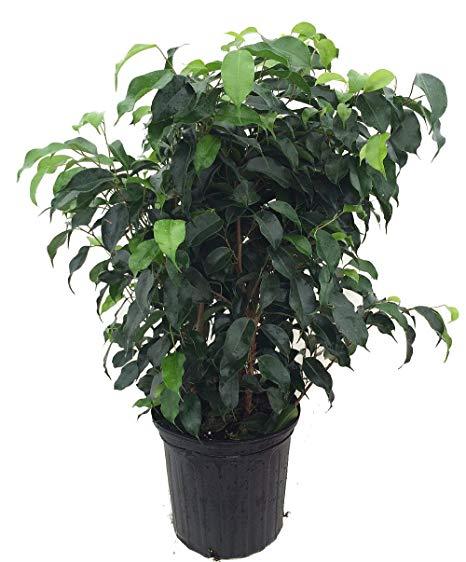 Indoor plants, toxic indoor plants